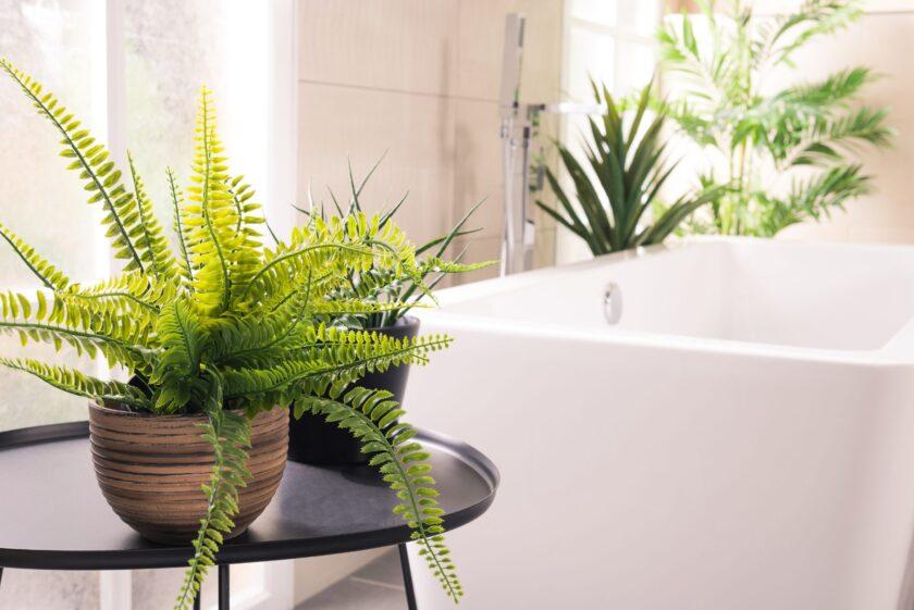 Cum alegi plantele potrivite pentru baie?